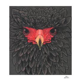 Bateleur Eagle Paper Collage African Bird Portrait