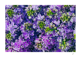 Background from blooming lilacs.