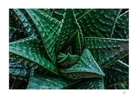 Aloe close up.