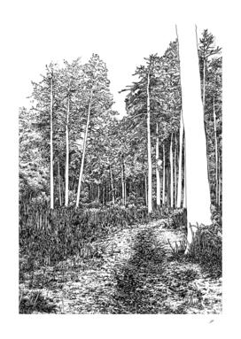 White trunks forest
