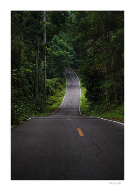 The asphalt road straight into the forest