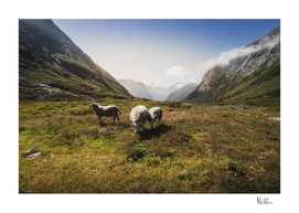 Roaming Sheep in the Mountains