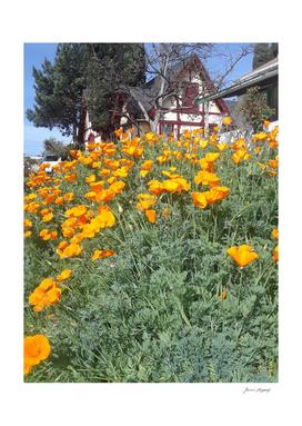 Dream Cottage in Poppy Field