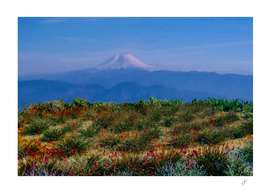 A flower meadow against the backdrop of a volcano.