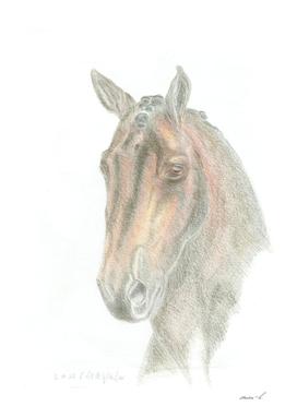 Wonderful dressage horse portrait