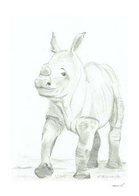 Rhino baby