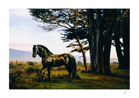Black horse on the background of wild nature.