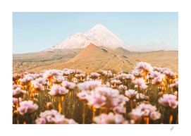Blooming meadow against the backdrop of a mountain volcano.