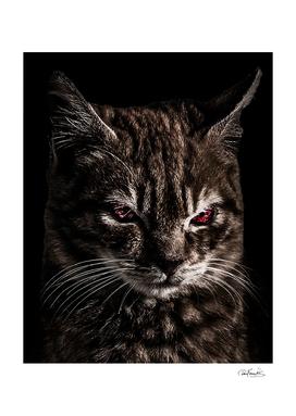 Creepy Kitten Portrait Photo Illustration