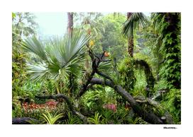 Singapore Botanical Garden 2