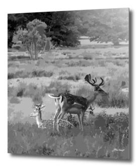 Fallow Deer Tranquility