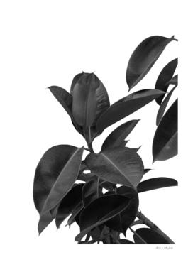 Ficus Elastica Glam #1 #tropical #decor #art