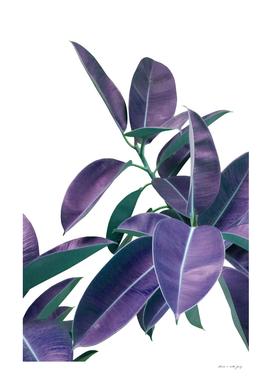 Ficus Elastica Violet Green Glam #1 #tropical #decor #art