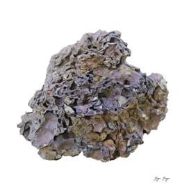 Calcium Element Symbol Ca Atomic Number 20 Alkaline