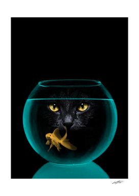 black cat goldfish II