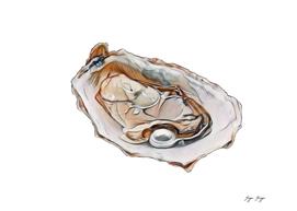 Pearl Glistening Object Tissue Shelled Mollusk Fossil