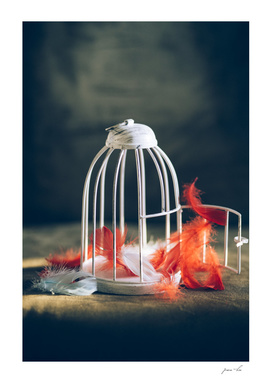 Bird cage and feathers