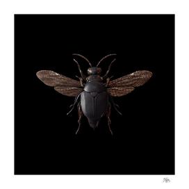 Engraved Entomology F