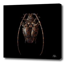 Engraved Entomology G