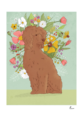 Florence The Poodle