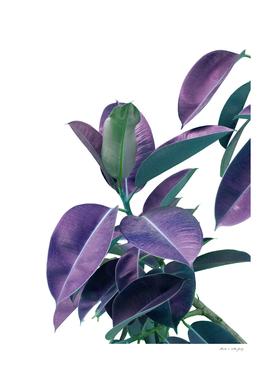 Ficus Elastica Glam #2 #tropical #decor #art