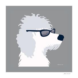 Cool Poodle Dog Wearing Sunglasses