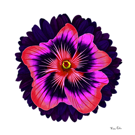 Red and Purple Big Flower
