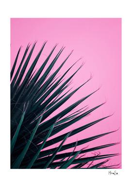 Palm leaf on pink