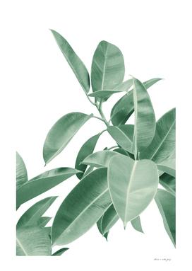 Ficus Elastica Soft Green Glam #1 #tropical #decor #art