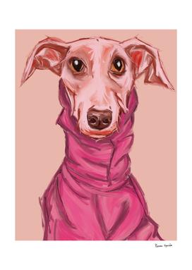 the elegant greyhound
