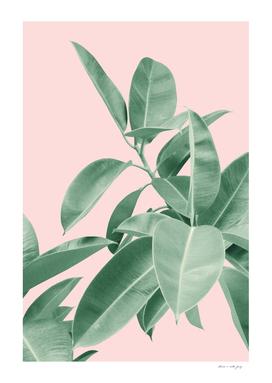 Ficus Elastica Soft Green Glam #2 #tropical #decor #art