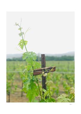 Vines & Cross
