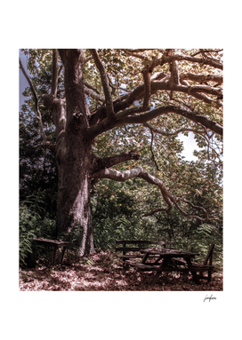 Wet shade of the tree