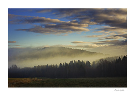 Morning mists are rising from a Swedish forest