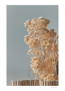 Dry flower for flower arrangement