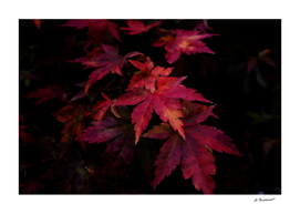 Autumn Leaves Number 2