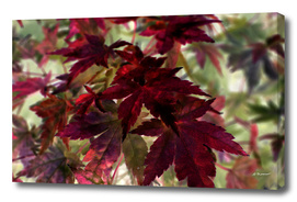 Autumn Leaves One