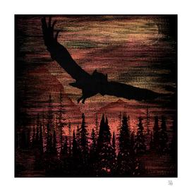 Owl Scratch