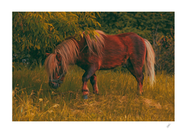 Pony in the meadow.