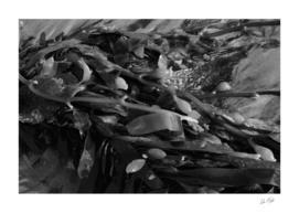 Seaweed in Black and White