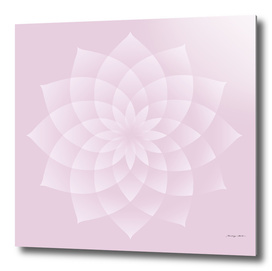 Thousand Petal Lotus in Pink