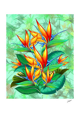 Bird of Paradise Flower Exotic Nature