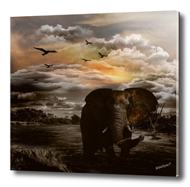 African Elephant Sunset River