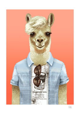 Stylish llama