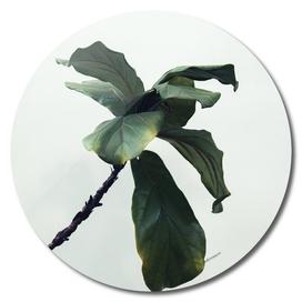 Minimalist green plant