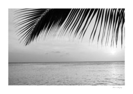 Caribbean Sunset Ocean Palm Dream #3 #tropical #beach #wall