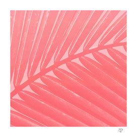 Hot Pink Palm