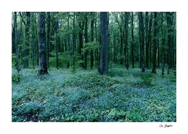 Blue Flower Understory