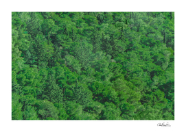 Leafy Forest Landscape Photo