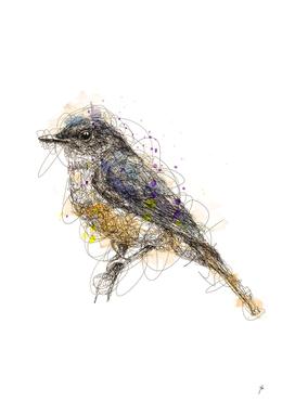 bluebird scribbles